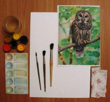Как нарисовать сову - уроки рисования гуашью (9)