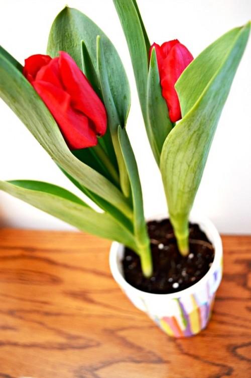 Что подарить маме на 8 марта своими руками - украшение цветочного горшка (7)