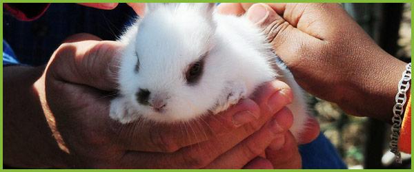 Домашнее животное для ребенка (3)