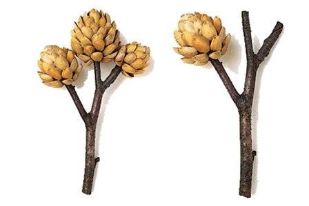 Дерево из фисташковой скорлупы (4)